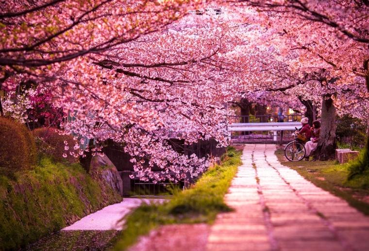 iaponia kioto.jpg
